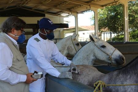 Vacina contra COVID-19 desenvolvida em cavalos tem 100 vezes mais potência