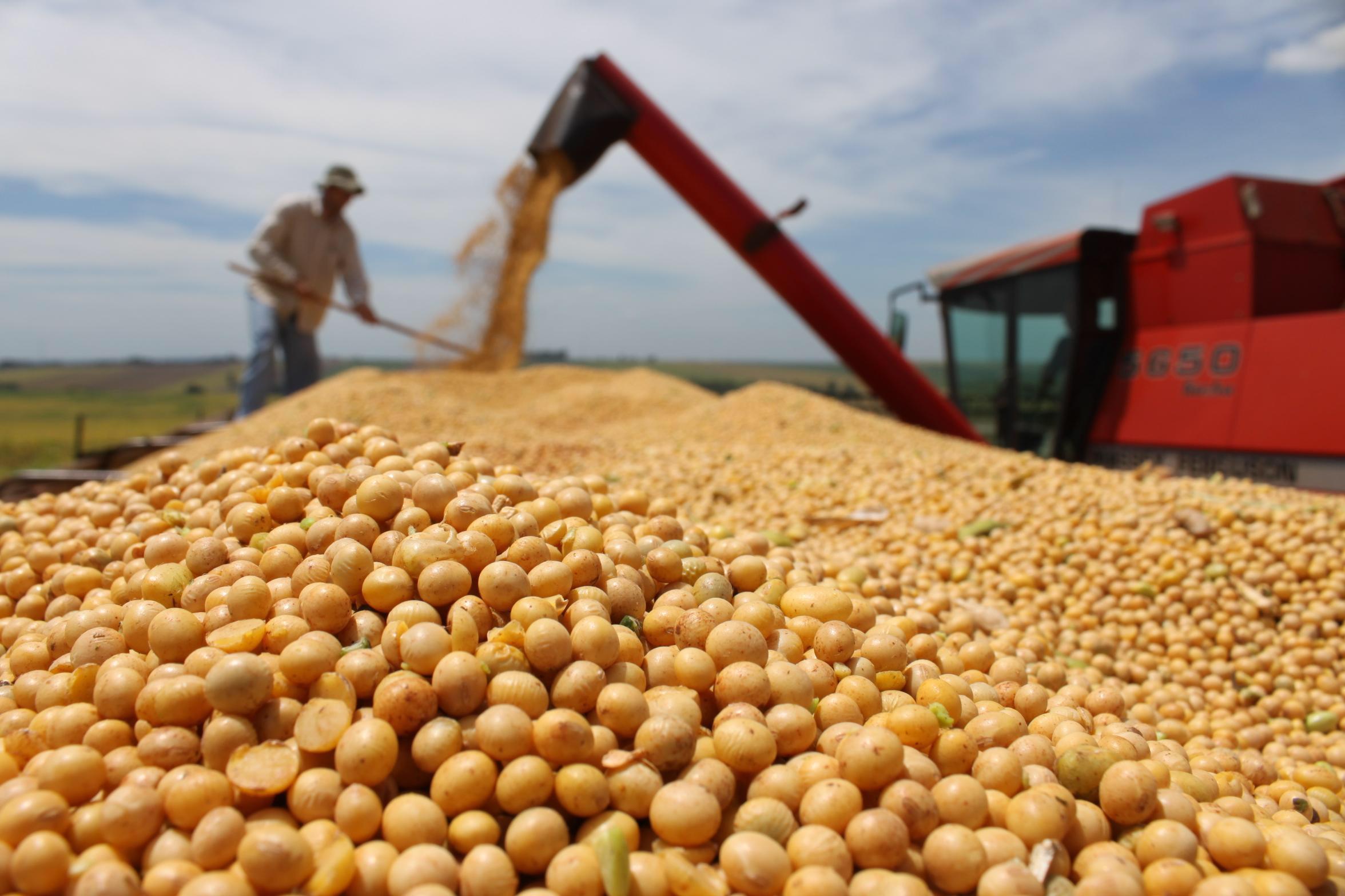 FORÇA DO AGRO: A produção de grãos da safra 2019/20 do Brasil caminha para o desfecho final de mais um recorde