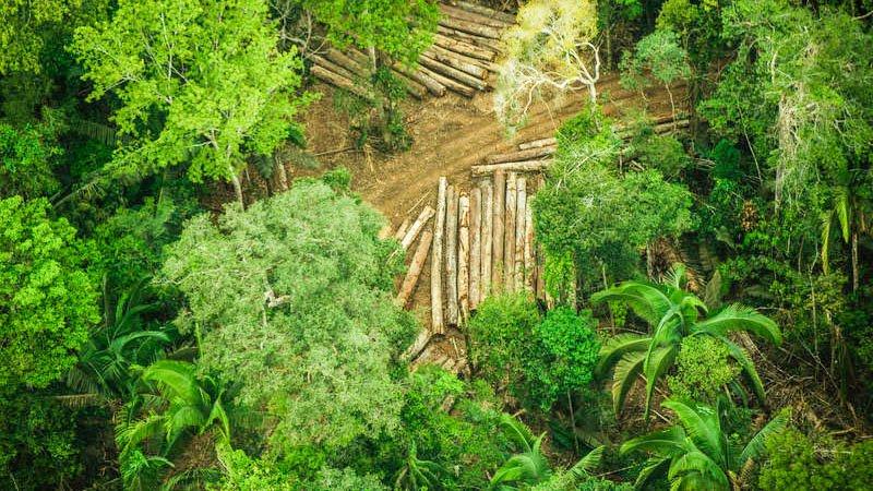 PF faz operação contra grupo criminoso responsável por queimadas em Terra Indígena Karipuna