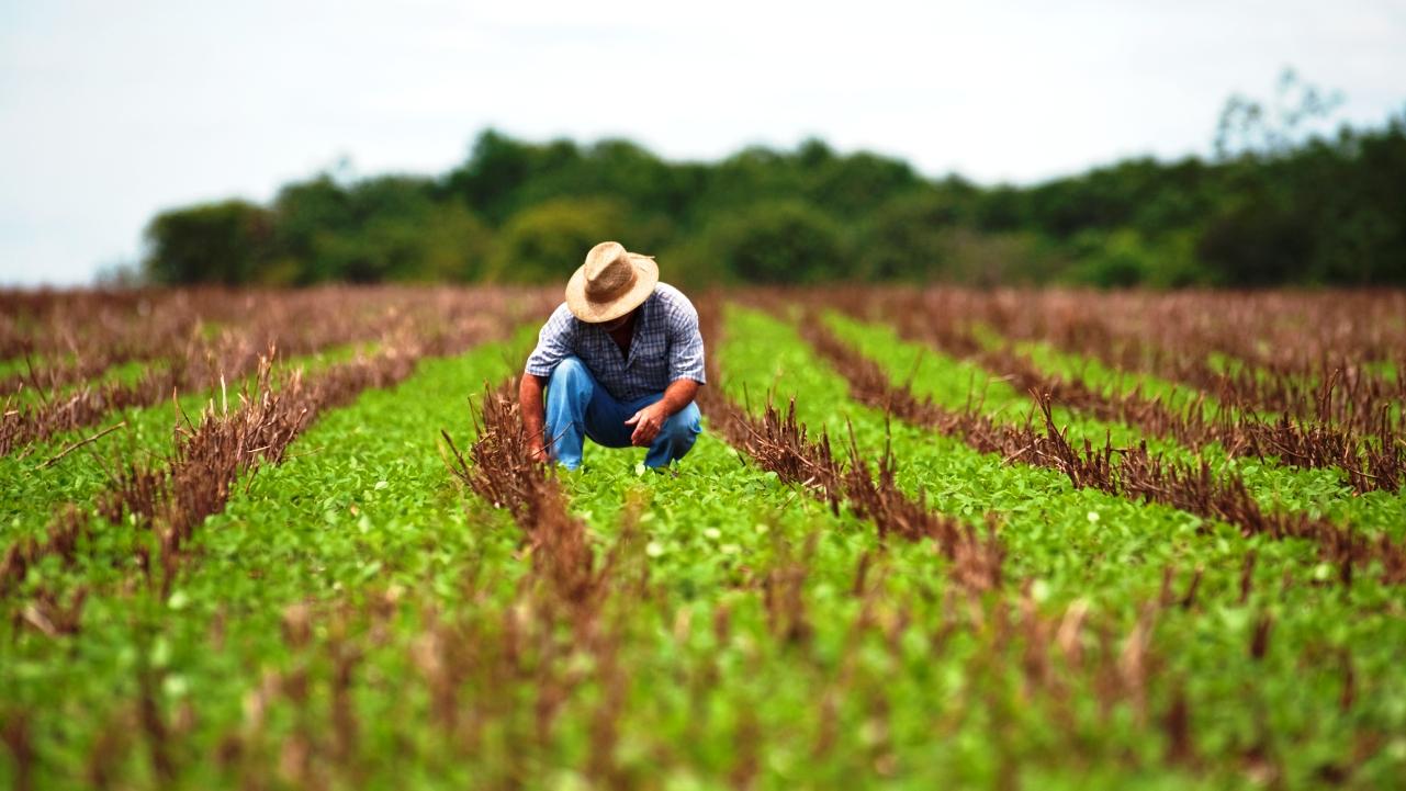 Governo flexibiliza regras para crédito rural a pequenos produtores
