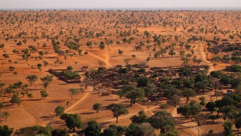 Pesquisadores descobrem mais de 1 bilhão de árvores no deserto do Saara