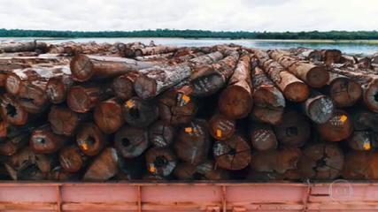 PF apreende toneladas de madeira extraída ilegalmente da Amazônia que iam para a Europa