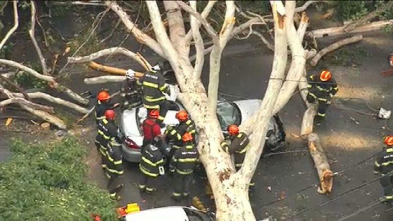 São Paulo tem previsão de novo temporal nesta quarta-feira; ontem, queda árvore matou mulher