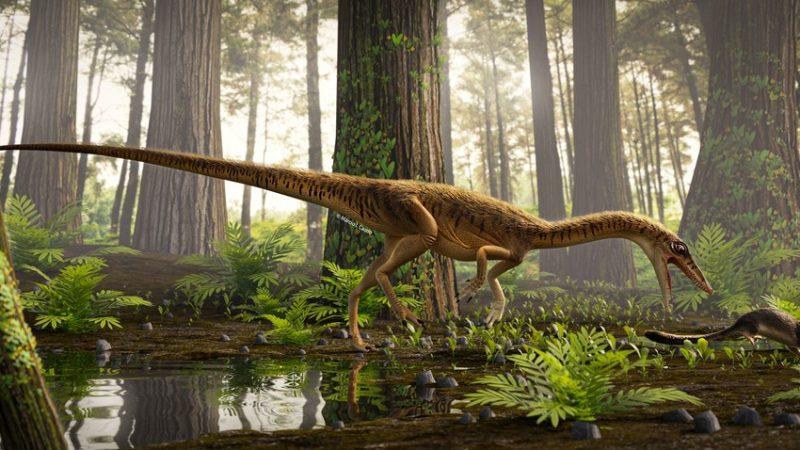 Pesquisadores descobrem espécie e antepassado do tiranossauro rex no Rio Grande do Sul