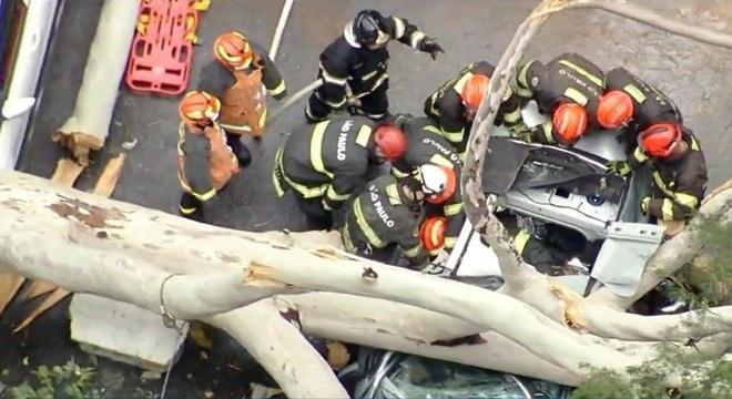 VIDEO: queda de árvore sobre carro deixa família presa e mata mulher em São Paulo
