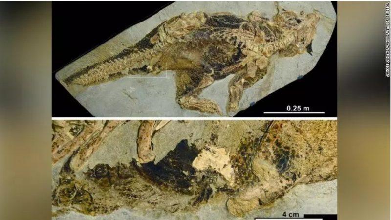 Fóssil revela como dinossauros faziam as necessidades e acasalavam