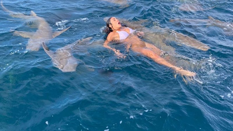 Bailarina do Faustão é abocanhada por tubarão em mergulho; vídeo e fotos mostram como ela ficou após a mordida
