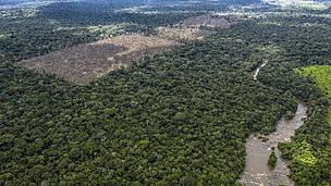 Governo Bolsonaro em ação: Desmatamento caiu 34% na Amazônia em fevereiro