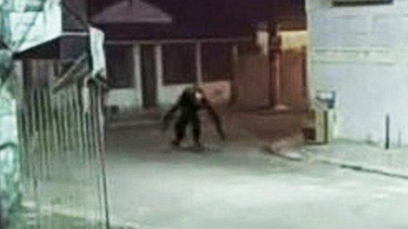 'Criatura estranha' circulando pela Bahia assusta moradores; VEJA IMAGENS