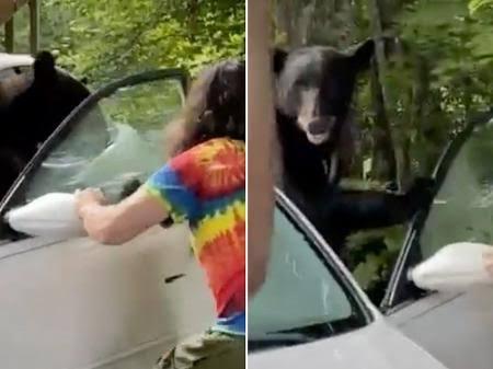 Homem abre porta para urso que ficou preso dentro de carro nos EUA; VEJA VÍDEO