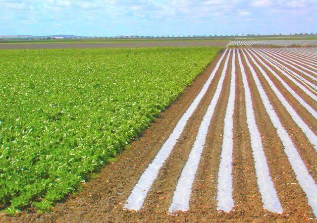 Sucesso: Produção agrícola em 2020 chega a R$ 470,5 bilhões e bate recorde