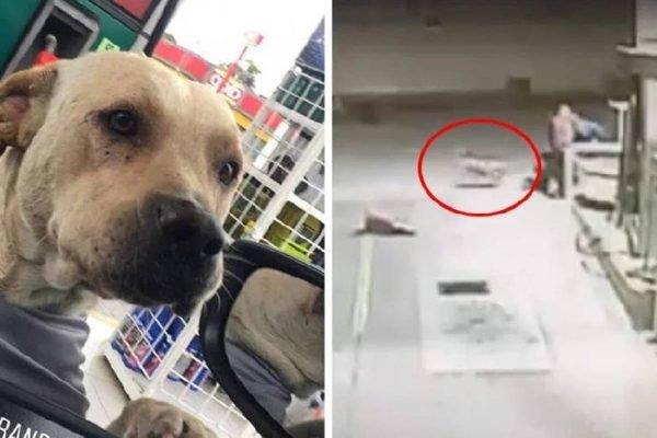 Cachorro adotado por frentistas salva o posto de gasolina durante assalto